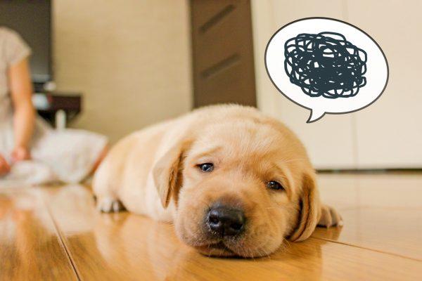 失敗した犬